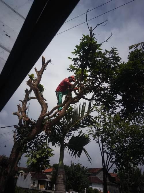 jasatebang pohon 085801557407