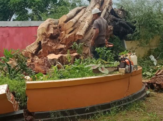 Jasa Tebang Pohon Bogor